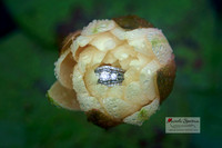 Beautiful close up of ring inside flower