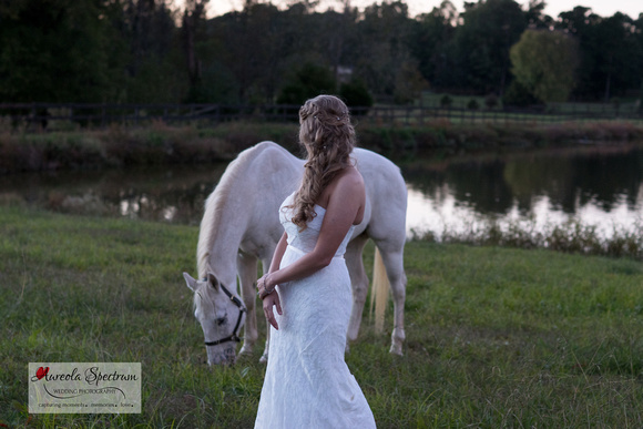 Bride and white horse in monroe, NC field